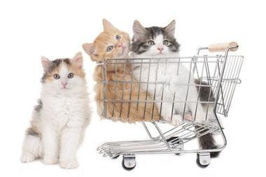 Pet Shopping
