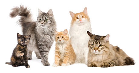 General-Image---Cats
